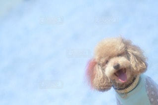 犬の写真・画像素材[11587]