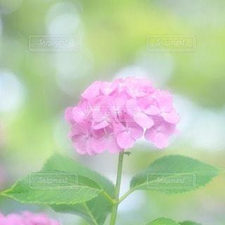 自然の写真・画像素材[32952]