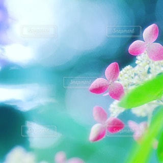 自然の写真・画像素材[32966]