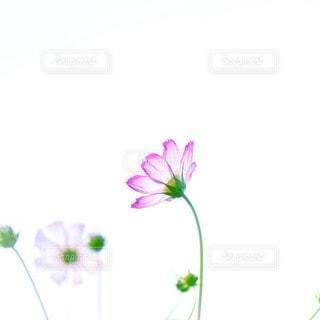 自然 - No.73593