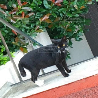 猫 - No.115967