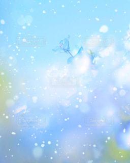 お花畑の写真・画像素材[156917]