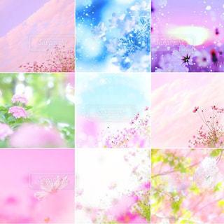 お花畑の写真・画像素材[156921]