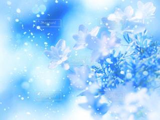 お花畑 - No.156923