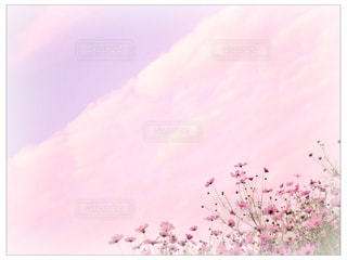 お花畑 - No.156925