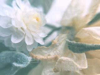 お花畑の写真・画像素材[163991]