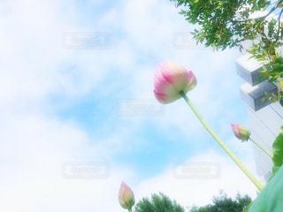 お花畑の写真・画像素材[163992]