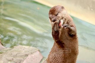 動物園の写真・画像素材[631880]