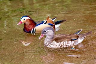 池の写真・画像素材[631882]
