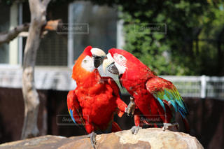 動物園の写真・画像素材[631885]