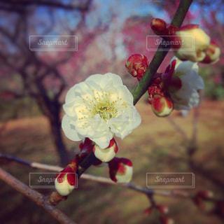 春の写真・画像素材[630714]