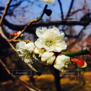 春の写真・画像素材[630724]