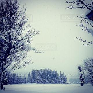 冬の写真・画像素材[630733]