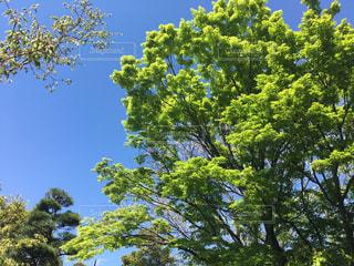 木の写真・画像素材[636015]