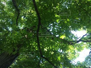 木の写真・画像素材[636021]