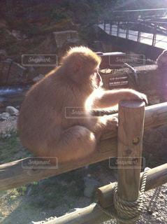 猿の写真・画像素材[630829]