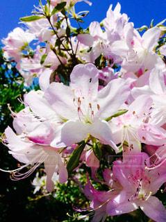 花の写真・画像素材[631221]