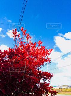 紅葉 - No.813606