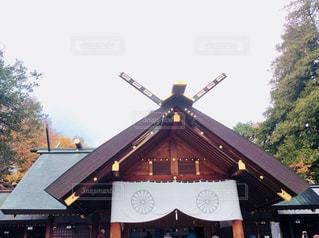 北海道神宮の写真・画像素材[855421]