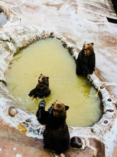 水の中の黒い熊 - No.855529