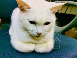 猫 - No.872703