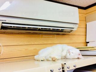 エアコンであったまる猫の写真・画像素材[953662]