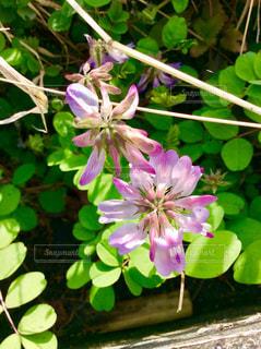 近くの花のアップの写真・画像素材[959542]
