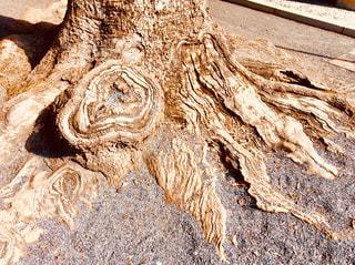木の根の写真・画像素材[1000041]