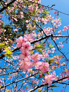 桜 - No.1013522