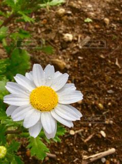 植物の白い花の写真・画像素材[1065312]