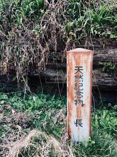 天然記念物の写真・画像素材[1110759]