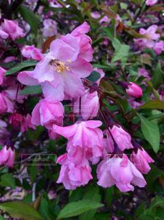 ピンクの花💐の写真・画像素材[1110842]