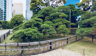 松の写真・画像素材[1122117]