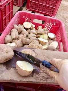 種芋切りの写真・画像素材[1191562]