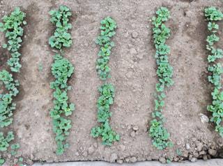 家庭菜園の写真・画像素材[1254731]