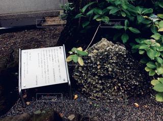 さざれ石の写真・画像素材[1268219]