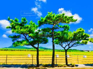 松の木と牧草ロールの写真・画像素材[1462987]