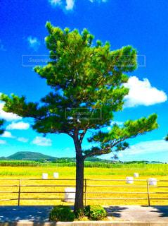 松の木と牧草ロールの写真・画像素材[1462988]