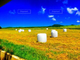 牧草ロールの写真・画像素材[1462989]