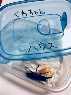 久米島クワガタの写真・画像素材[1524925]