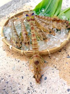 久米島の車エビの写真・画像素材[1651199]