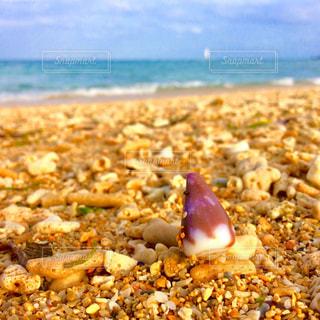 貝殻と海の写真・画像素材[1820955]