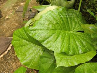 庭の緑の植物の写真・画像素材[2289964]