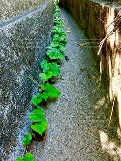 植物の写真・画像素材[2392561]