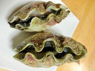 シャコ貝の写真・画像素材[2768506]