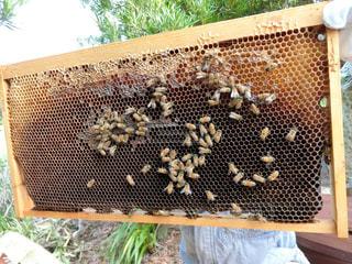 ミツバチの写真・画像素材[2790565]