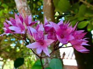 花の写真・画像素材[2999894]