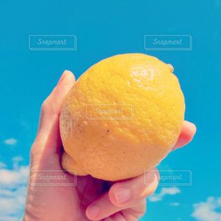 レモンの写真・画像素材[2999912]