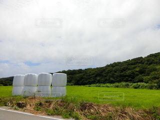 牧草の写真・画像素材[3507264]