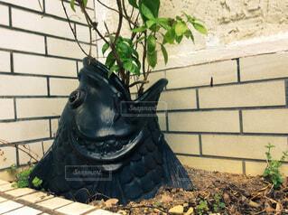 鯉の植木鉢の写真・画像素材[3876972]